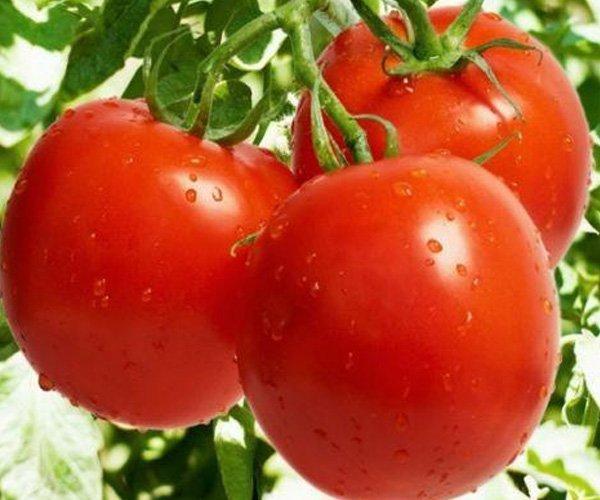 купить рассаду помидор в подольске